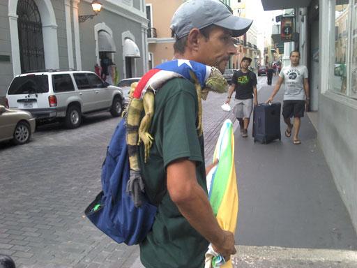 a proud rican iguana