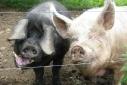 Photo Fridays: Pre-Bacon! ;)