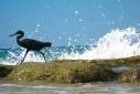 Silent Sunday: Splash!