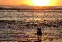 dog staring at the sea.